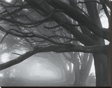Cypresses, Skyline Drive, South San Francisco, 1996 Stretched Canvas Print by Mark Citret