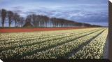 Netherlands I Stretched Canvas Print by Maciej Duczynski