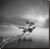 Water Tree, c.2006 Stretched Canvas Print by Moises Levy