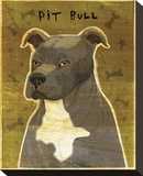 Gray Pit Bull Stretched Canvas Print by John Golden