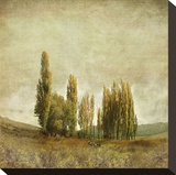 Autumnal Feelings Stretched Canvas Print by Carlos Casamayor