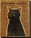 American Shorthair Stretched Canvas Print by John Golden