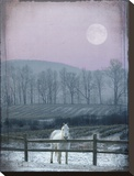 Prissy On Snowy Night Stretched Canvas Print by Dawne Polis