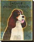 English Springer Spaniel (tri-color) Stretched Canvas Print by John Golden