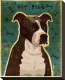 Brindle Pit Bull Stretched Canvas Print by John Golden
