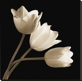 Three Tulips Stretched Canvas Print by Michael Harrison