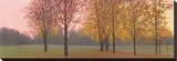 Autumn Dawn, Maples Stretched Canvas Print by Elissa Gore