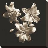 Three Lilies Opspændt lærredstryk af Michael Harrison