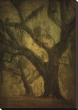 Avery Island Oaks, Study 2 Reproduction transférée sur toile par William Guion