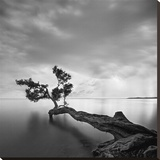Water Tree Stretched Canvas Print by Moises Levy
