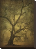 Avery Island Oaks, Study 12 Stretched Canvas Print by William Guion