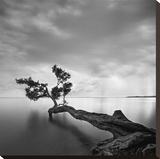 Drzewo w wodzie Płótno naciągnięte na blejtram - reprodukcja autor Moises Levy