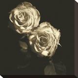 Circus Roses Opspændt lærredstryk af Michael Harrison