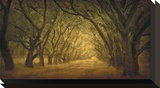 Evergreen, New Alley, Right Side Reproduction transférée sur toile par William Guion