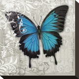 Blue Butterfly II Stretched Canvas Print by Alan Hopfensperger