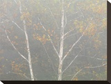Pastel Tree 1 Stretched Canvas Print by Derek Jecxz