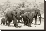 Elephants I Stretched Canvas Print by Chris Farrow