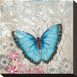 Light Blue Butterfly Stretched Canvas Print by Alan Hopfensperger