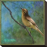 Vireo Stretched Canvas Print by Chris Vest