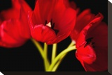 Red Tulips I Stretched Canvas Print by Christine Zalewski