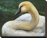 Swan Impressão em tela esticada por Chris Vest