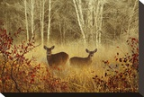 Foggy Deer Stretched Canvas Print by Chris Vest