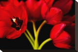 Red Tulips II Stretched Canvas Print by Christine Zalewski