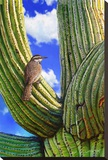 Cactus Wren Stretched Canvas Print by Chris Vest