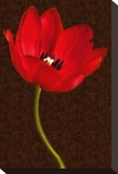 Red Tulip III Stretched Canvas Print by Christine Zalewski