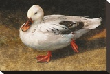 White Duck Leinwand von Chris Vest