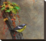 Magnolia Warbler Stretched Canvas Print by Chris Vest