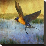 Barnswallow Stretched Canvas Print by Chris Vest