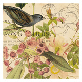 Birdwatching IV Prints by Tammy Repp