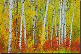 Autumn in Riding Mountain Stretched Canvas Print by Mike Grandmaison