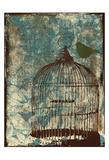 Birdcage Prints by Jace Grey