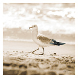 Seagull II Prints by Suzanne Foschino