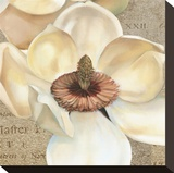 Magnolia Masterpiece I Stretched Canvas Print by Louise Montillio