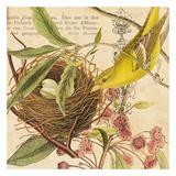 Birdwatching III Posters par Elizabeth Jordan