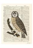 Owl Page Schilderij van Tina Carlson