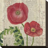 Poppy Pages Square II Stretched Canvas Print by Louise Montillio