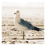 Seagull IV Prints by Suzanne Foschino