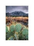 Cactus Overcast Giclee Print by Bob Larson