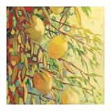 Four Lemons Giclee Print by Jennifer Lommers