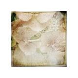Hydrangeas 4 Giclee Print by Dawne Polis