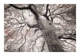 Glowing Tree Giclee Print by Michael Hudson