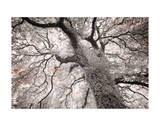 Glowing Tree Giclee Print by Michael Hudson