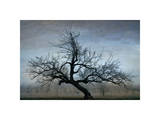 Farm House Tree Giclee Print by David Winston