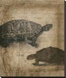 Tandem Tortoise I Stretched Canvas Print