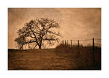 Tree and Fence II Giclee Print by David Winston