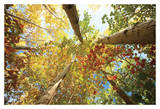 Forest Canopy Prints by Michael Hudson